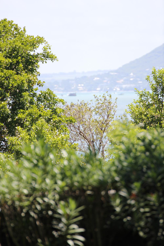 Suechtig-nach-Mauritius 05